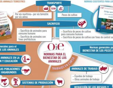 BOLETÍN PERIÓDICO INFORMATIVO Nº 1 / 2015 de la AAZ