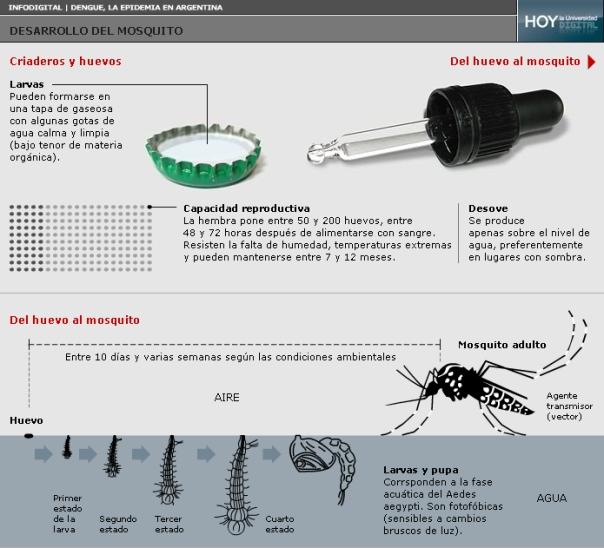 Dengue, chikungunya y zika. ¿Cómo detenerlos?